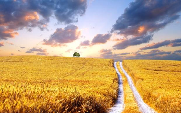 harvest field road wheat background widescreen wallpaper